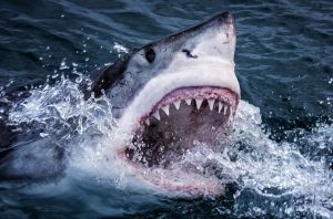Шок! Акулы – убийцы атакуют Марсель!