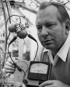 Рон Хаббард используетс Е-мерт на помидорах