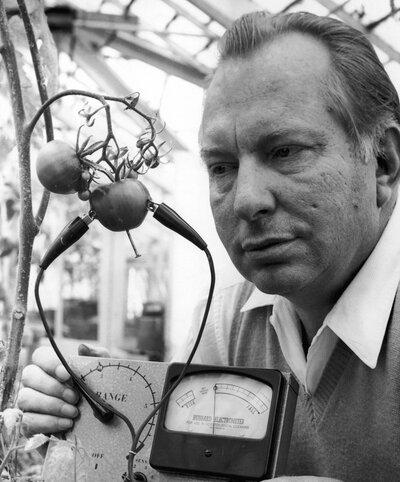 Рон Хаббард измеряет таинственную силу помидоров